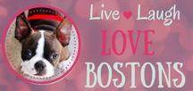 Boston Terrier Gift Guide / boston terrier, boston terrier gifts, boston terrier mugs, men's boston terrier tees, women's boston terrier tees, custom boston terrier art, personalized boston terrier gifts, boston terrier christmas gifts, boston terrier gift ideas, funny boston terriers
