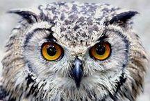 owl'ddicted