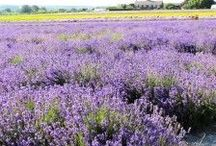 What to see in Provence? / Provence one of the most popular regions of France - Discover more on Travel France Online Provence Section on http://www.travelfranceonline.com/welcome-provence/