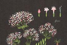 Illustration-Flower