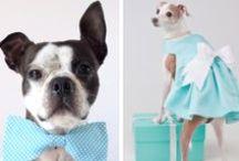 Любимый пес - важный гость на свадьбе