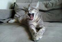 Gatos <3 / Amor da vida toda!