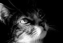 ¿Alguien ha visto un lindo gatito? / Amor infinito por estos seres..