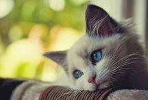 Foto Animali ! / Le foto più belle di gatti e altri animaletti !!