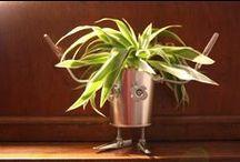 Mr. P. Pot / Mr. Plant Pot...
