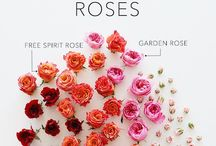 Roses / Beautiful roses for every gardener and every garden.