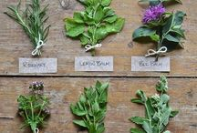 Herbs / Inspiration for growing, cooking and using herbs.