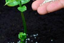 buone idee per il giardino e l'orto