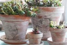 Pots and Pottery / Looking for something unique for your yard? Find plenty of pot and pottery inspiration to match your style.