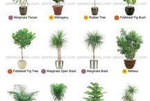 Houseplants - Indoor plants / Beautiful houseplants to create a warm, comfortable, clean feeling in your home.