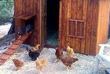 Hen Homes