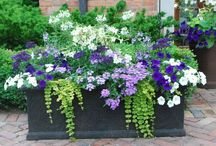 Container Gardening - Planters / Inspiration to create a beautiful container garden for your yard.