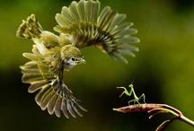 nature / by Lydi Lei