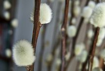 4 seasons ~ Spring