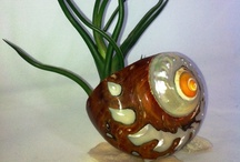 Air Plants Love / https://www.etsy.com/listing/115308686/rubra-air-plant-and-tiger-sea-shell / by Air Plant Studio