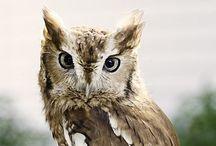 Birds { owls }