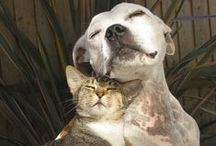 Odd Couples /  Mostly cats and Their interspecies Besties!