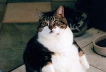 Fat Cats! / Fat shaming a feline or two