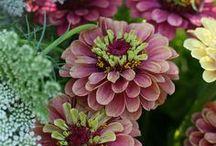 Flowers / by Karen Marthens
