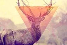 Triangle & Oh deer!!