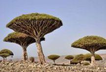 Les arbres, témoins de notre histoire / « Quelqu'un s'assoit à l'ombre aujourd'hui parce quelqu'un d'autre a planté un arbre il y a longtemps. »  Warren Buffett