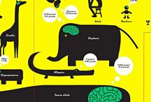 information design for children (contemporary books)