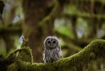 Owls  / by Libby Manis