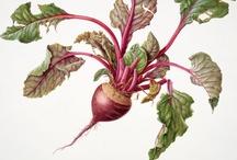 Contemporary Botanical Art
