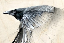 Contemporary Natural Science Illustration / This is a compilation of beautiful drawings , paintings, drawings and sketches by contemporary illustrators.