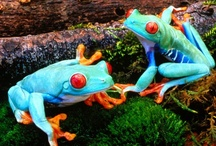 FROGS / Frogs are funny creatures. They have such an excellent sense of humor.