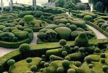Green / Plants, Gardens, Flowers,...