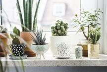 I N D O O R • P L A N T S / Botanical, indoor plants, green, studio, earth