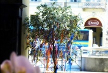 My Flower' shop / this is more than a simple flowers' shop...! You can find Us in Turin (IT) near PortaNuova station
