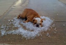 critter heat wave / critters need to cool off too...
