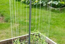 Gardening - kertészkedés
