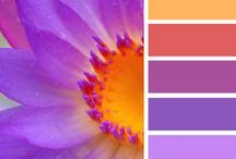 Gorgeous Color Palattes / Searching for ideas for your wedding color scheme?  Look no further!  We've put together an assortment of beautiful color combinations to inspire you.