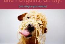 Veterinary Practice Marketing / Tips, tricks and resources for marketing your veterinary practice online.
