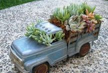Portable succulent gardens / by Succulent Lover