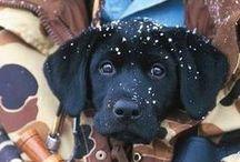 Hunting and Hunting Dogs / Hunting and Hunting Dogs