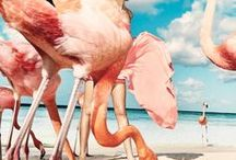 Editorials ღ Fashion / Fashionphotography ღ Editorials / Campaigns / Advertisements