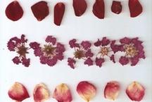 Beauties of flowers