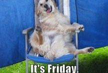 Happy Friday Dogs! / Everybody loves Friday - even our four legged friends!