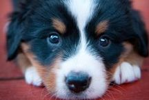 Puppy Power / Puppies make the world a better place. Fact.