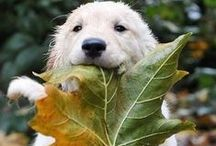 Pawsome Autumn