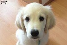 Cute Doggy Snaps / by BorrowMyDoggy.com