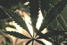 Herbs & Highs