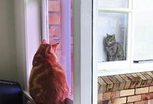 A Cat for every Window!