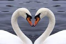 RAKKAUS / love