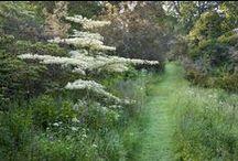 Summerfield Broadoak / Screening behind tennis court . Plants tolerant of heavy winds