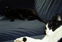Cats / Love mine: Zorro, Mitzi and Jimmie*